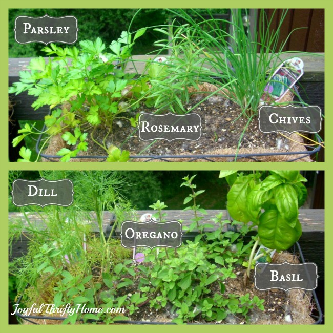 Garden Design Garden Design with How to Start an Herb Garden