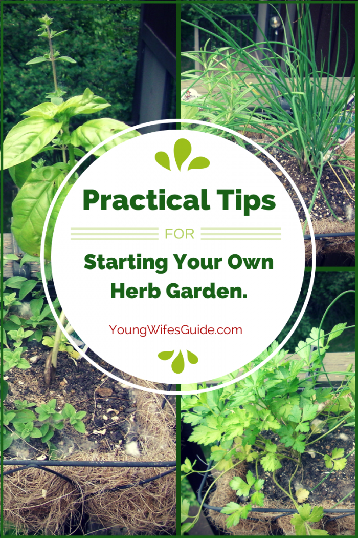 Practical tips for starting your own herb garden young wife 39 s guide - Practical tips to make money from gardening ...
