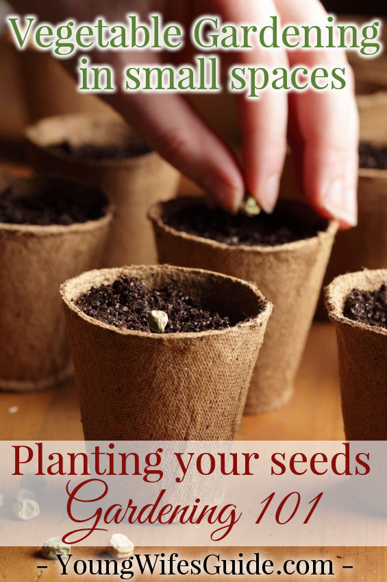 A mini guide to getting your container garden started!! Planting seeds 101
