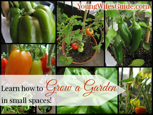 Learn How to Grow a Garden in Small Spaces