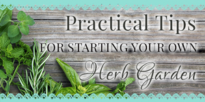 Practical Tips for Starting an Herb Garden